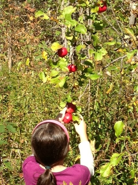 Amelia apple picking