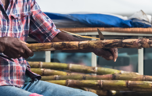 Man peels some sugar cane on the market